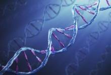 深圳大学捕获细胞核中最短特异DNA图像