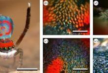 纳米3D打印技术研究孔雀蜘蛛的彩虹色