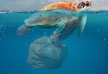 海洋浮油塑料达地表水126倍:被大量摄入