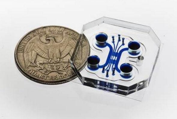 新型医疗电子芯片可复制神经肌肉接头