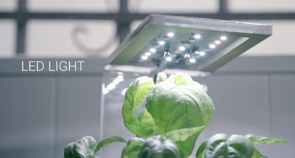FogBox气培箱:解锁家养植物新姿势