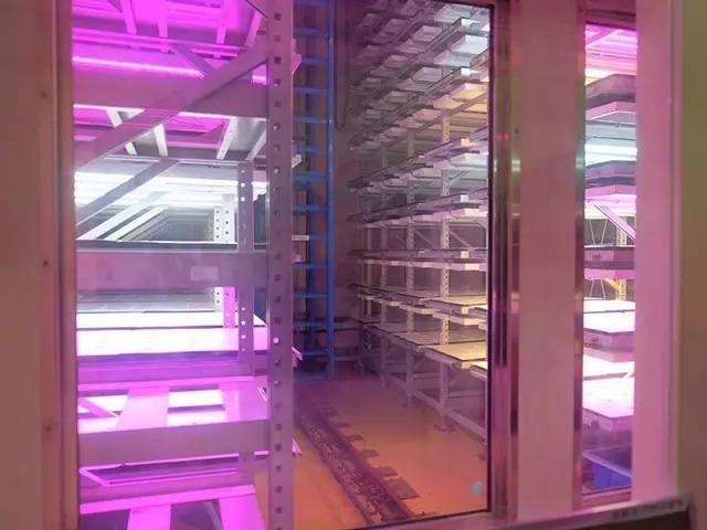 从日本植物工厂看植物照明市场需求及技术发展方向
