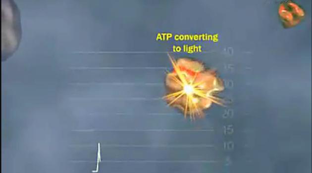 焦磷酸基因测序Pyrosequencing工作原理