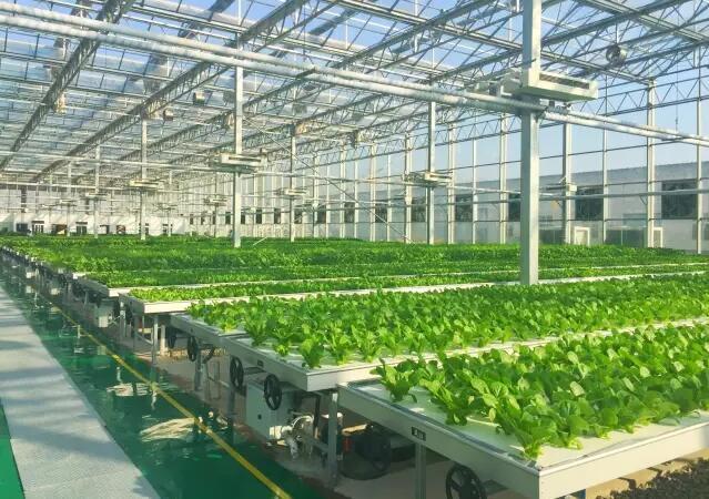 新鲜好玩儿!探访BOE植物工厂