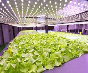 植物照明封装厂技术及产品研究现状分析