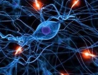 激光技术助力解密人类大脑