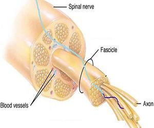 碳纳米管纱刺激脑内神经元 促生各种疾病新疗法