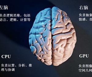 """中国科学家首次解析人脑""""中央处理器"""""""