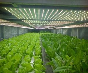 植物照明市场高成长性 厂商积极布局