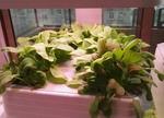 家庭智能种菜机:从此可以在家种菜了
