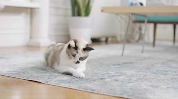 宠物互动神器 让你随时随地陪伴爱宠