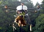 流浪猴搞破坏致损失百万 日本农民派无人机驱赶