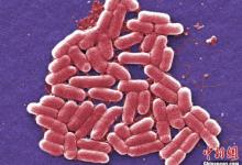 抗生素滥用成动物保健品引担忧