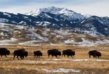 蒙大拿州因廉价电力受青睐