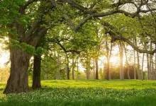 """在家门口种这样一棵""""树"""",以后就不用交电费了!"""