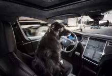特斯拉发布车辆安全数据报告