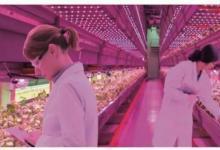 植物照明封装厂的技术发展状况与竞争格局