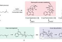 生物碱合成Cope重排及环化反应结构