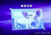 """京东bet36体育在线投注进军养猪业 还推出了""""猪脸识别"""""""