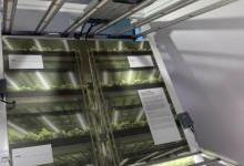 LED植物照明市场火热 欧司朗加码布局