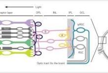 谭建川:人本照明的生物学背景解析