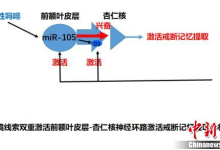 中国脑科学专家发现戒毒瘾新靶点