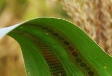 可穿戴石墨烯传感器可测农作物用水量