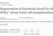 全球首例人类自体肺干细胞移植再生