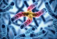 华裔专家团队开发出基因试纸