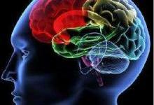 心灵的窗户:视网膜能预测认知下降