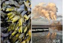 3D打印海藻来源的材料可吸附污染物