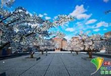 VR、3D、无人机 大学樱花节玩出新花样