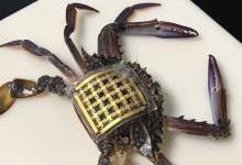 """新型""""海洋皮膚""""傳感器問世 非侵入性追蹤水下生物"""