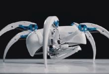 蜘蛛和果蝠仿生学的机器人