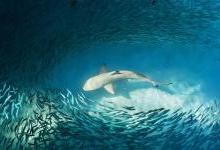与鲨共舞:当人工智能遇见海洋杀手