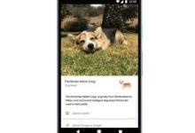 谷歌镜头现在可以识别猫狗的品种