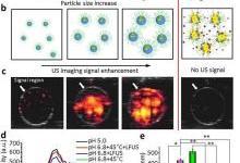 用于高性能超声成像和抗癌药物传递的尺寸可调的纳米孔