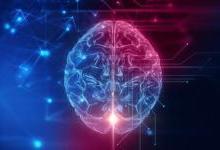 AI芯片竟只与老鼠大脑差不多?