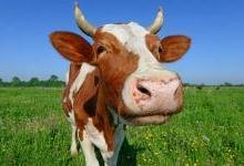 困惑与前瞻:吃肉背后的经济学