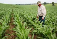 """智慧农业MEMS技术是农场主的""""神算子""""吗?"""