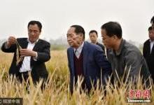 沙漠种植水稻成功:物联网技术成关键