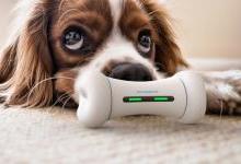智能骨头发布,可以与宠物进行互动