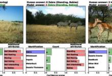 """越来越多动物正在灭绝,""""AI+动物""""能否改变这一局面?"""