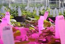 """植物照明前景看好,科技巨头们跨行""""种菜"""""""
