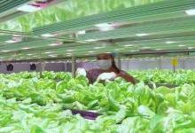 6600平方米植物工厂在渝建成投产
