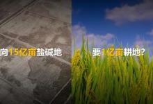 华为与袁隆平合作培育海水稻