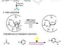 我国首次实现仿生合成方法烷基化