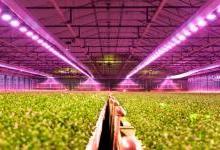 欧司朗植物照明LED的特点以及优势