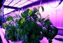 人工智能引领现代农业的未来