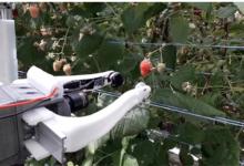 世界首个覆盆子采摘机器人上线